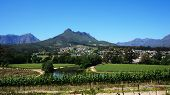 foto of south-western  - Vineyards in Western Cape South Africa with blue sky - JPG