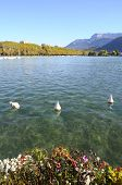 pic of annecy  - Overview of Lake of Annecy and mountains in france - JPG