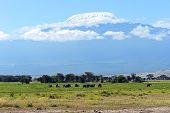 pic of kilimanjaro  - Elephant with Mount Kilimanjaro in the background - JPG