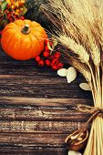 image of fall-wheat  - Autumn composition  - JPG