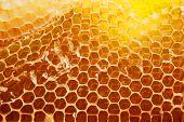stock photo of bee-hive  - Bee hive background - JPG