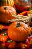 stock photo of cornucopia  - Traditional pumpkins for Thanksgiving and  Halloween in autumn colors - JPG