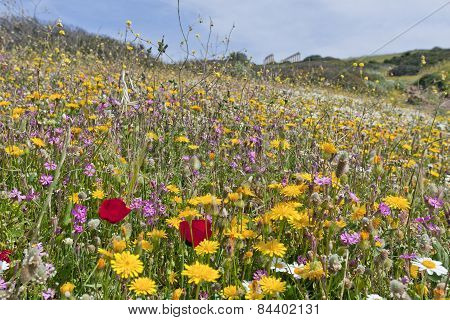 Close up on colorful flowers on a slope towards the Mediterranean Sea.