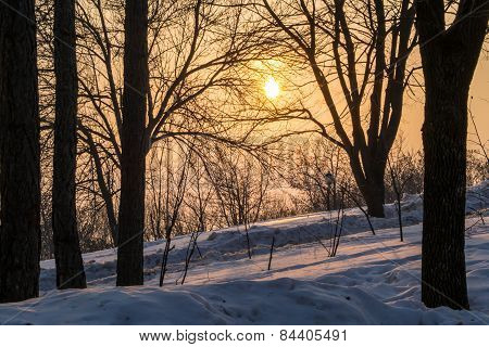 Winter Sunset And Dark Trees