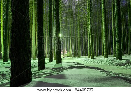 Nightime In A Winter Forest
