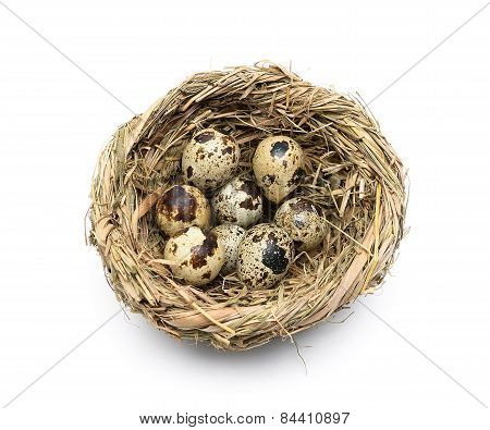 Quail Eggs In A Nest Isolated On A White Background