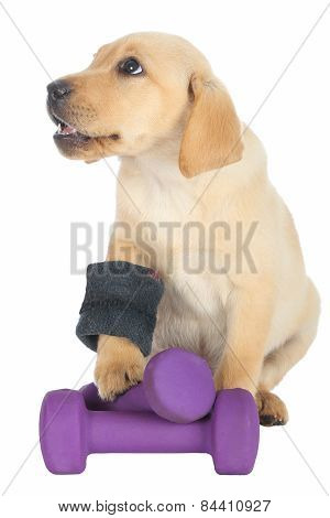 Cute Puppy Exercise Concept