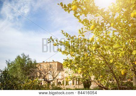 Idyllic view with lemon tree in historic spain village deia
