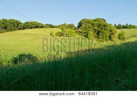 Australian Hinterland Meadow