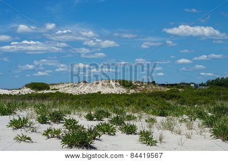 Natural Beach Landscape