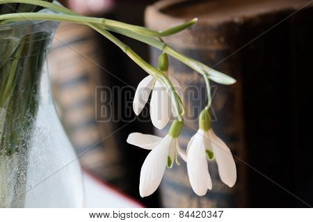 Snowdrops In The Vase On The Bookshelf