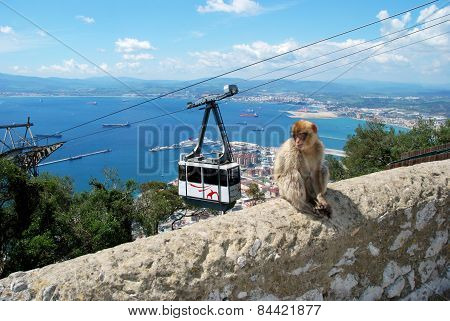 Barbary Ape and Cable Car, Gibraltar.