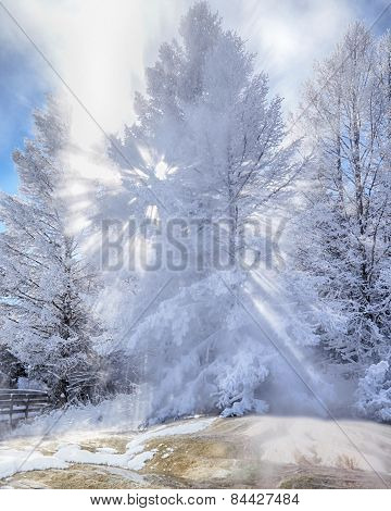 Sunbeams through Snow Covered Tree in Steam