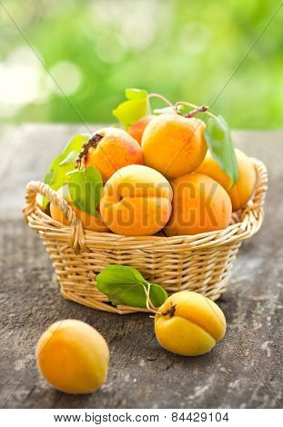Fresh organic apricot in the basket