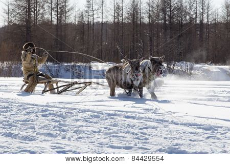 Race On Reindeer