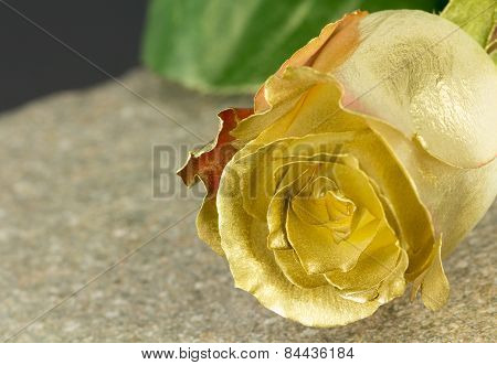 Gold Painted Fresh Rose