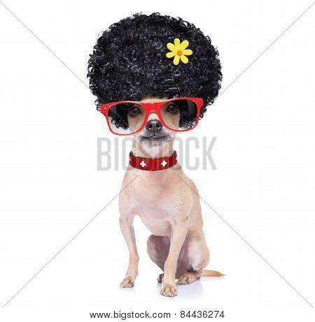 Funny Dumb Dog