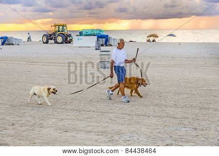 Man In Late Afternoon Walks Along South Beach With His Dogs