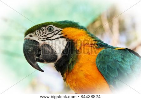 Striking Close-up Portrait Picture Of Colourful Macaw Head