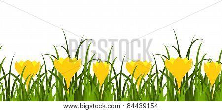 Crocuses And Grass Border