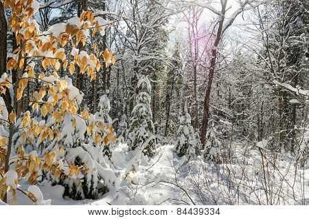 Winter Scenes In Woods