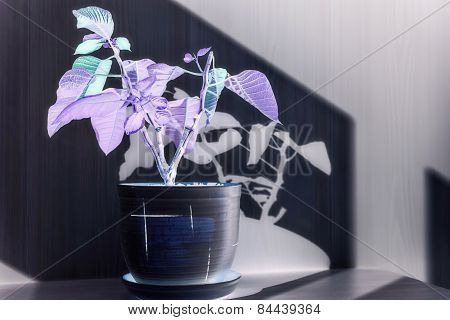 Photo Negative Houseplant In A Ceramic Pot