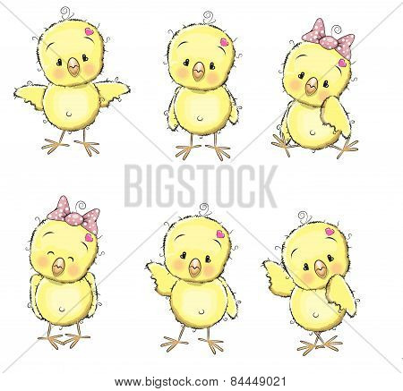Six Chicks