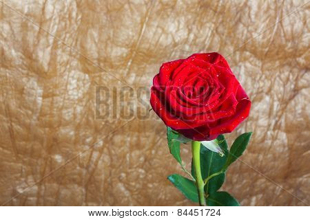 Beautiful Red Rose With Green Leaves Isolated On Gold Crushed Background