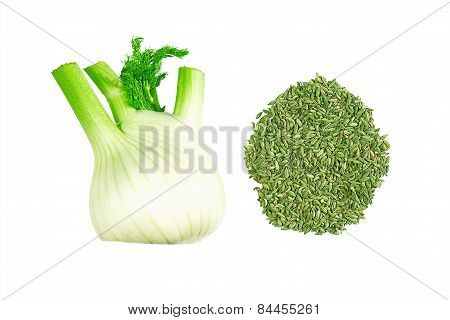 Fennel bulb and seeds isolated on white