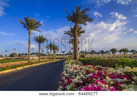 Beautiful Views Of The Flowers And Palm Trees. The Road To The Hotel. Sharm El-sheikh. Egypt.