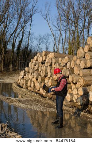 Lumber Engineer