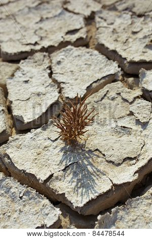 Plant in dried cracked mud selective focus
