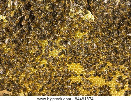 Building Instinct Bees