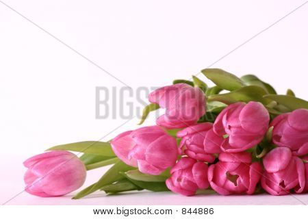 Laying Bouquet of Tulips