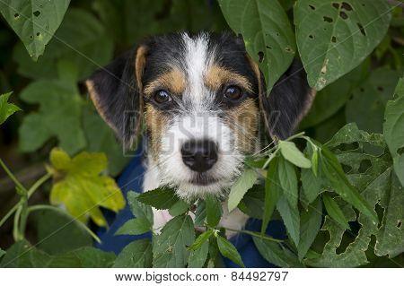 Cute Puppy Dog Closeup