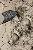 stock photo of bear tracks  - bear foot print on mug and man foot - JPG
