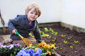 foto of  plants  - Little boy gardening and planting vegetable plants and flowers in garden outdoors - JPG
