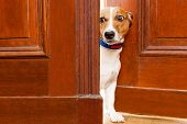 Nosy Dog At The Door poster