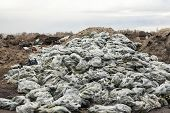 image of landfills  - Rotten cucumbers in plastic sacks on the landfill - JPG