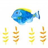 picture of spearfishing  - Vector Tang or Surgeon fish in watercolor style - JPG