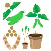 stock photo of soya beans  - vector illustration of soy bean and plants - JPG