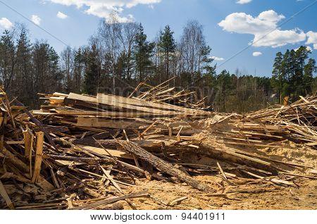 Pine sawmill offcuts