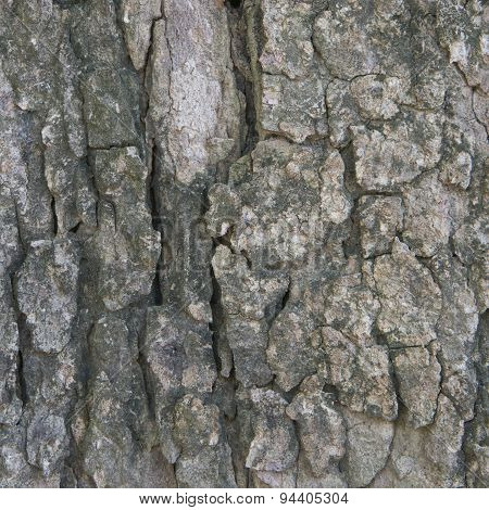 Aged Bark In Forest Texture