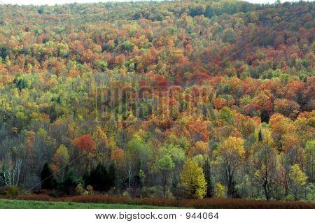 Follaje de otoño 34