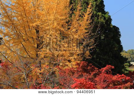 Autumn Leaves Of Eikan-do Zenrin-ji