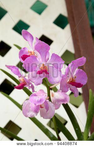 Orchids In Botanical Garden At Kuala Lumpur