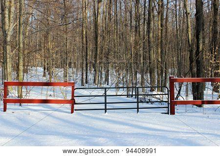 Gate Near Woods in Winter