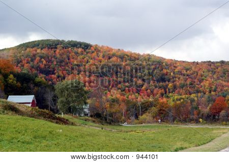 Follaje de otoño 38