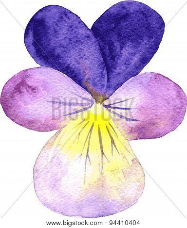 watercolor violet flower