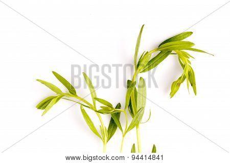 Hyssop Herb Leaf